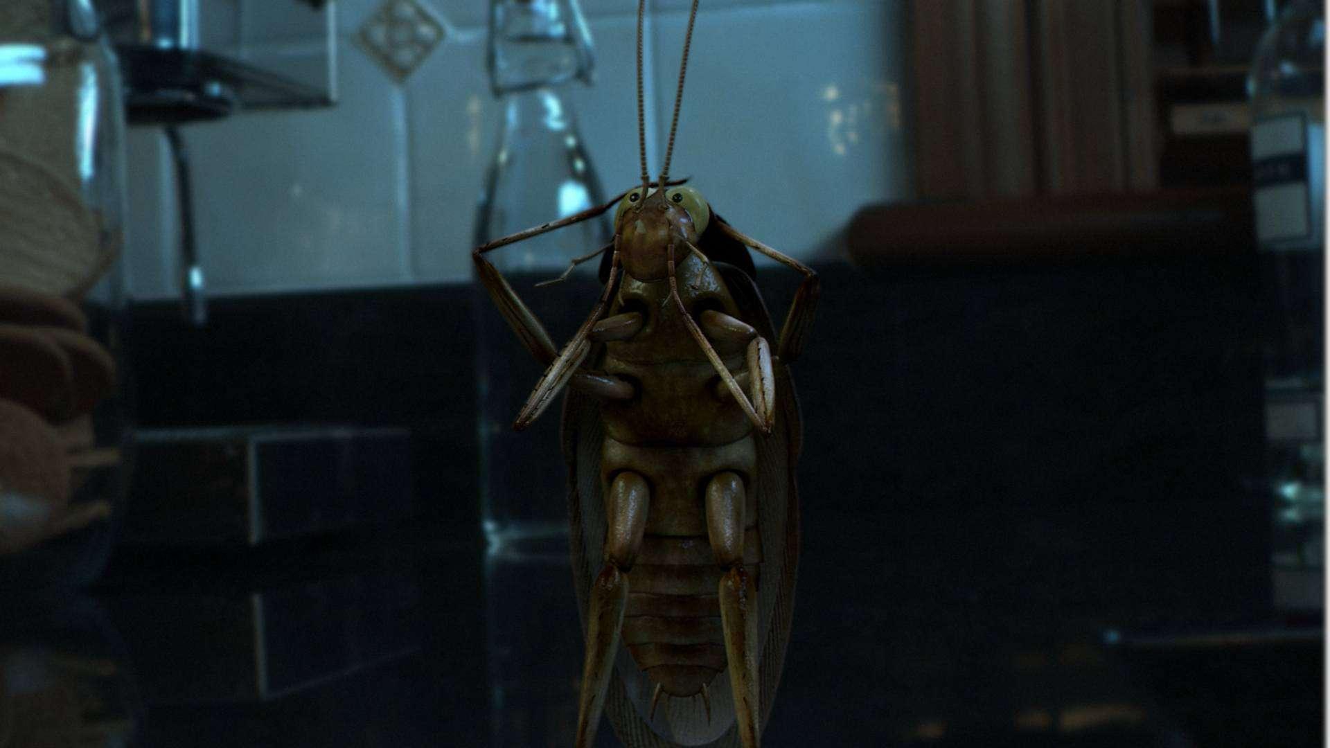 dangerous cockroaches