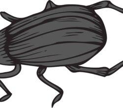vector-roach