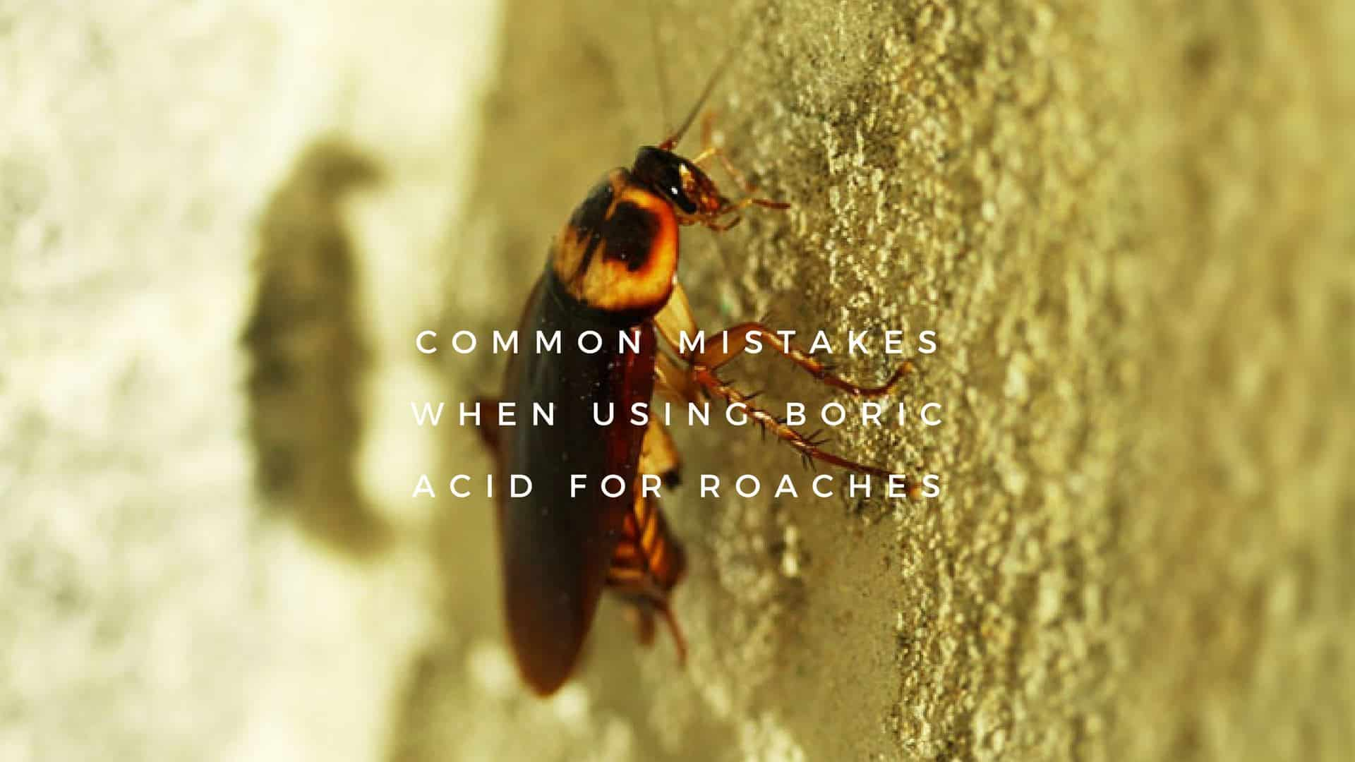 Using Boric Acid for Roaches