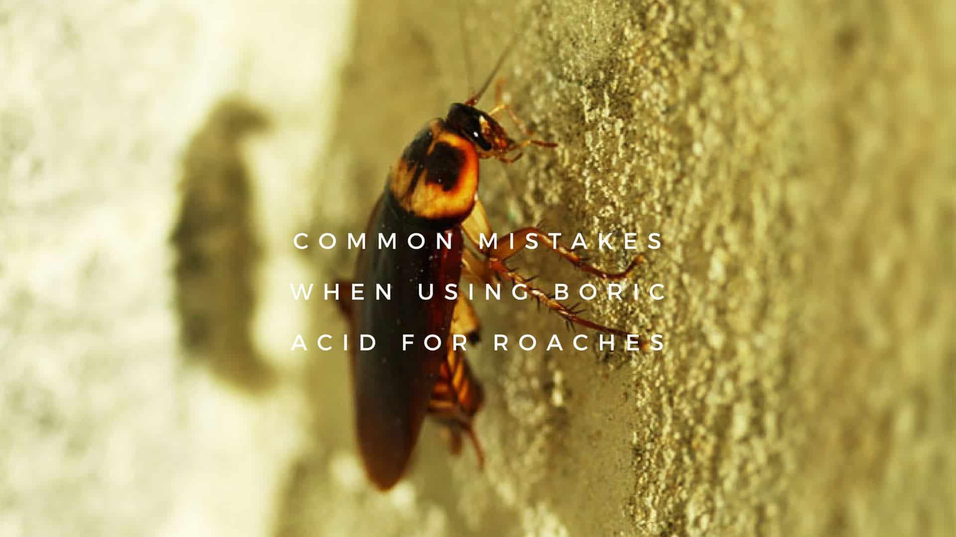 Using Boric Acid for Roaches