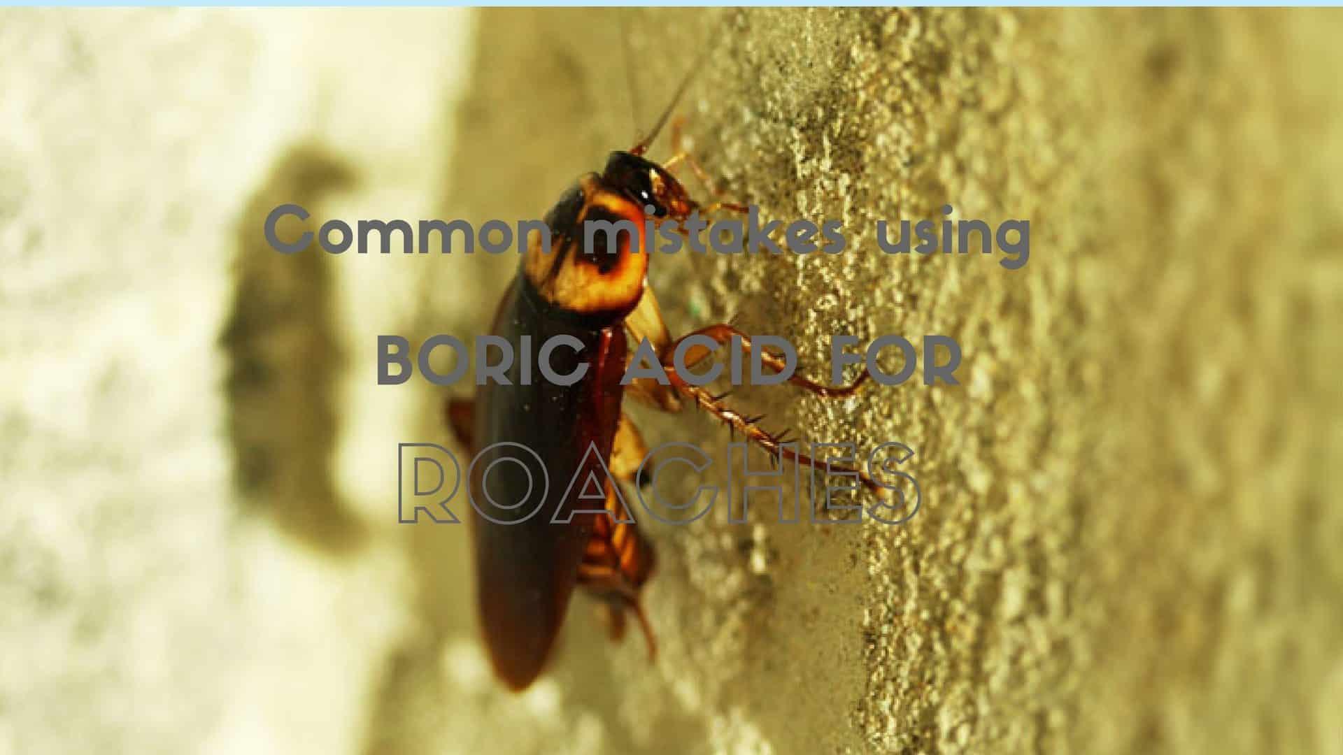 Boric Acid for Roaches