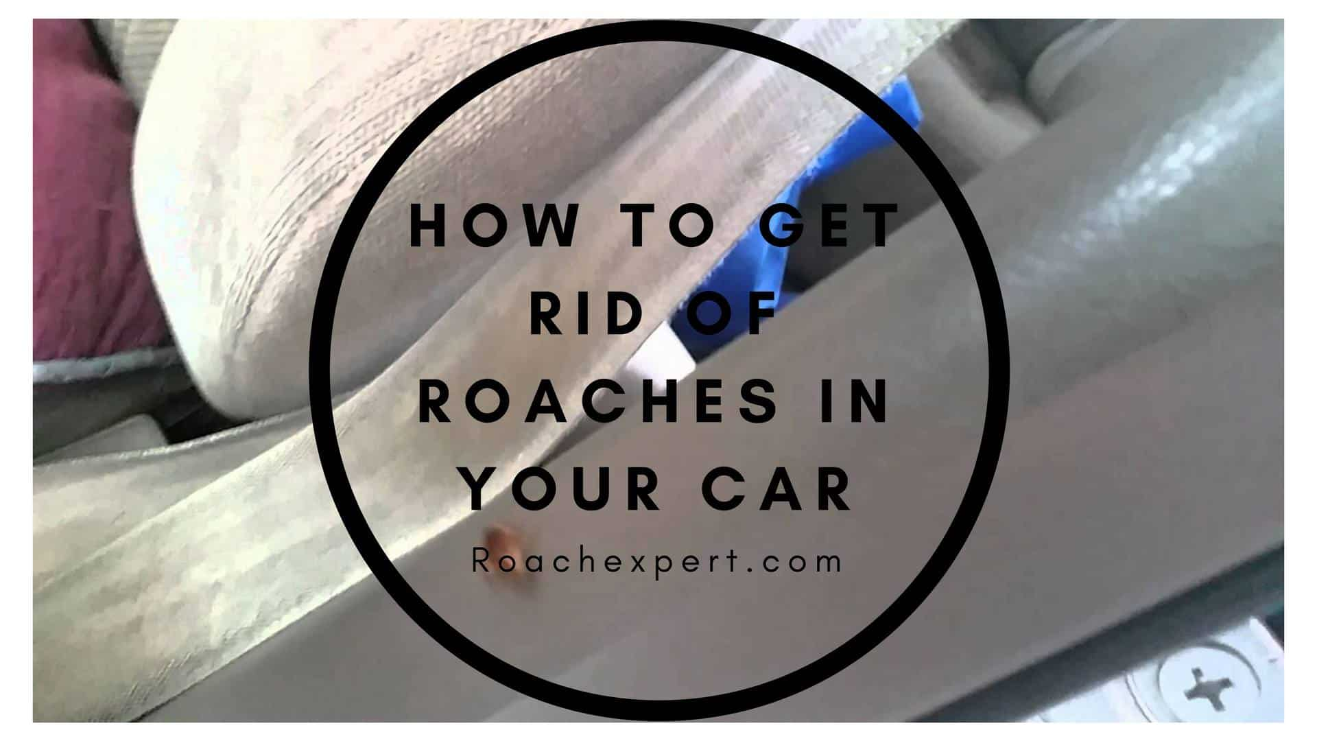How To Get Cockroaches Out Of A Car