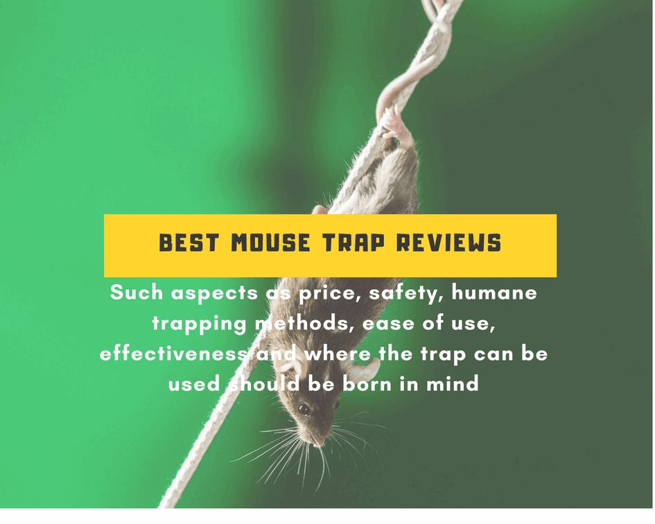 Best Mouse Trap Reviews