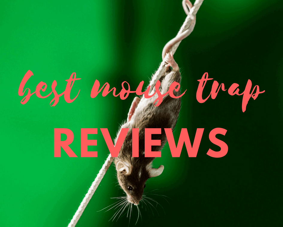 Best Mouse Trap Reviews