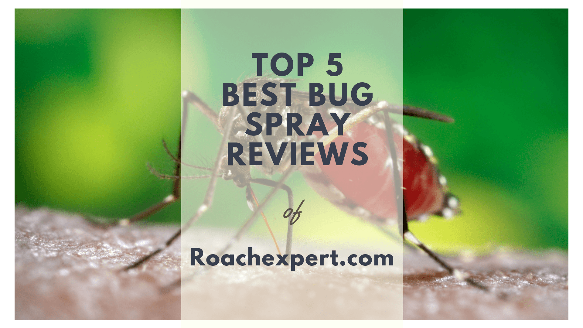 Top 5 Best Bug Spray Treatments Reviews for Indoor and Outdoor Home Pest Control