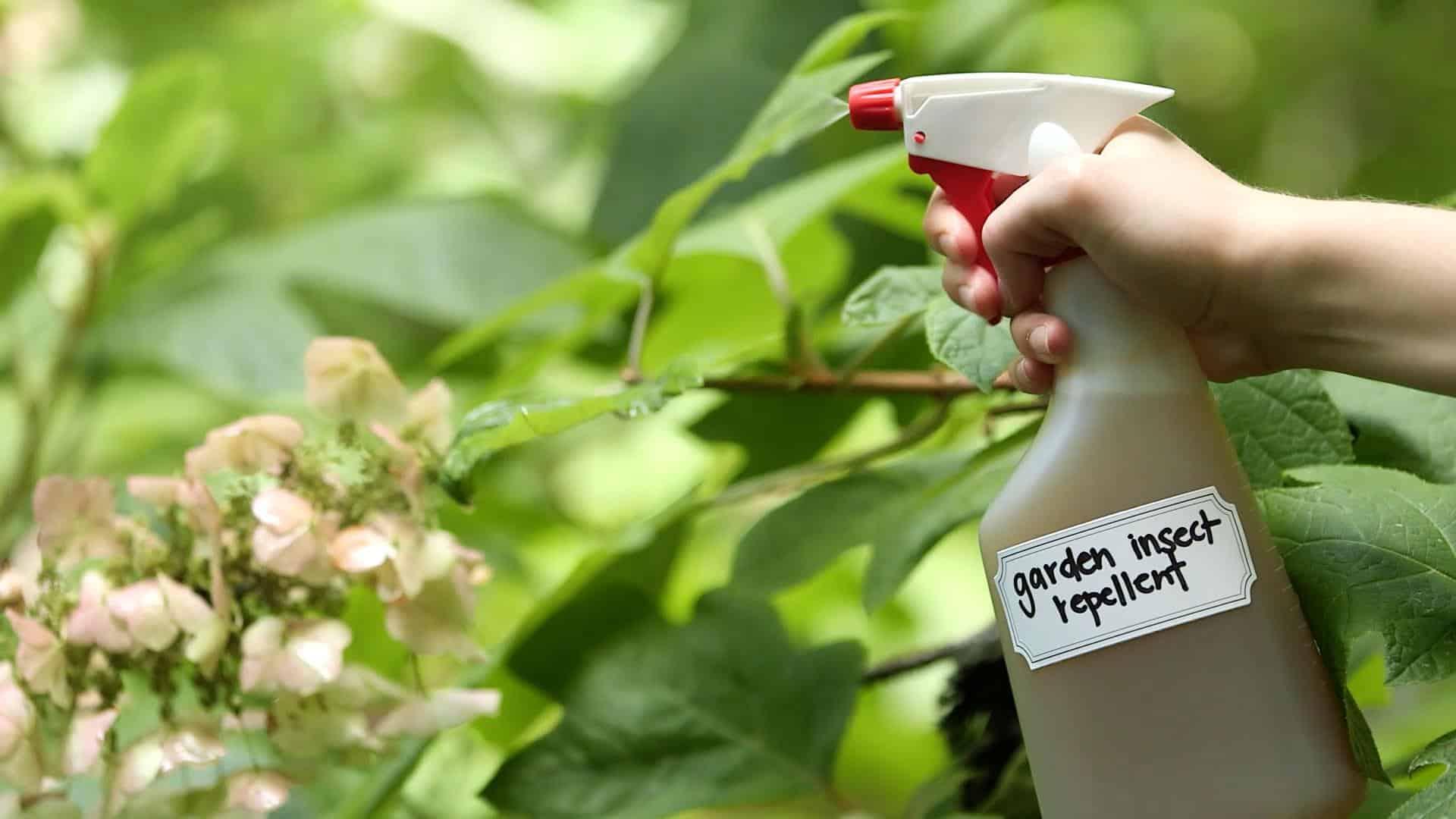 Spray garden insect