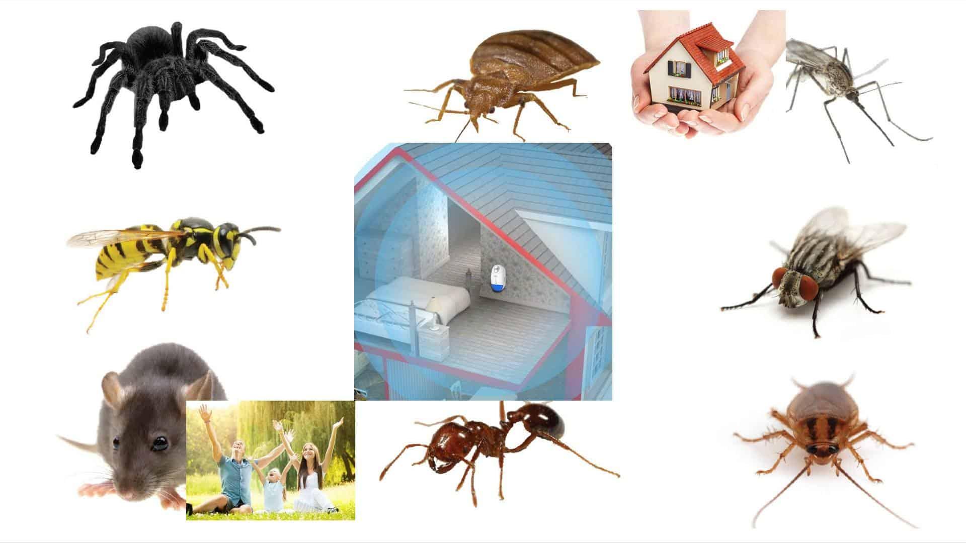 6 best ultrasonic pest repeller reviews
