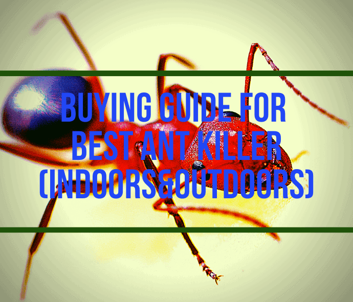 Buying Guide for Best Ant Killer