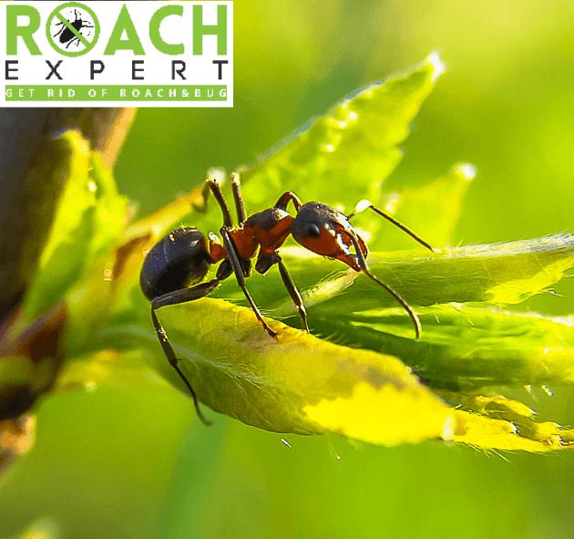 Best Ant Killer Reviews
