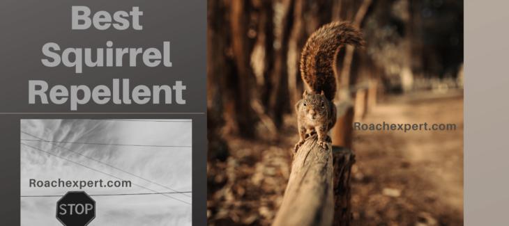 Best Squirrel Repellent Reviews 2020