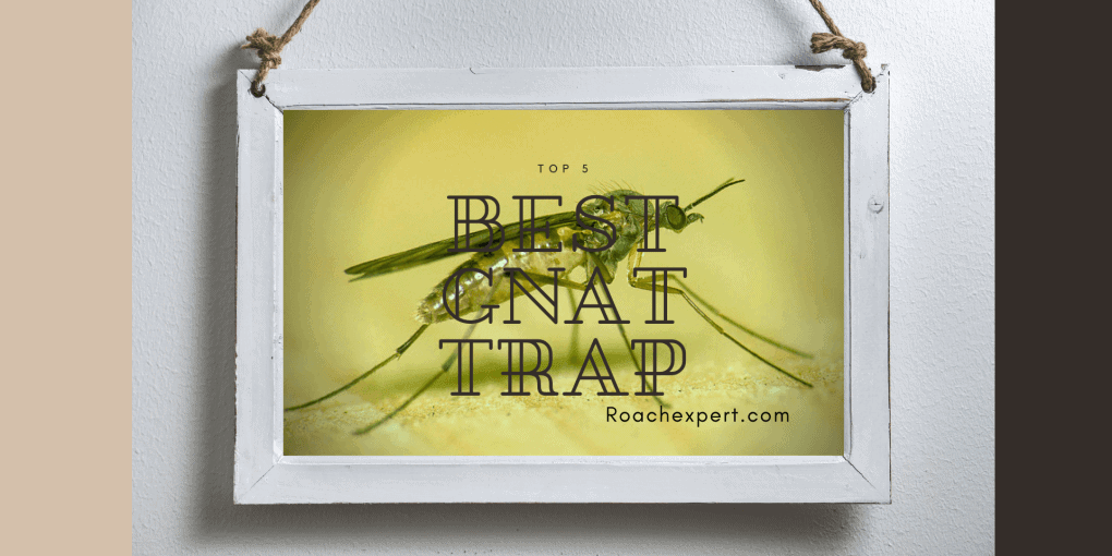 Top 5 Best Gnat Trap Reviews