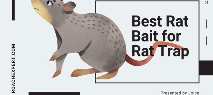Best Rat Bait for Rat Trap