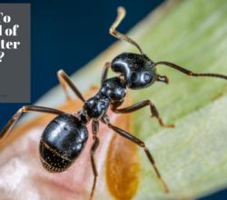 Get Rid of Carpenter Ant
