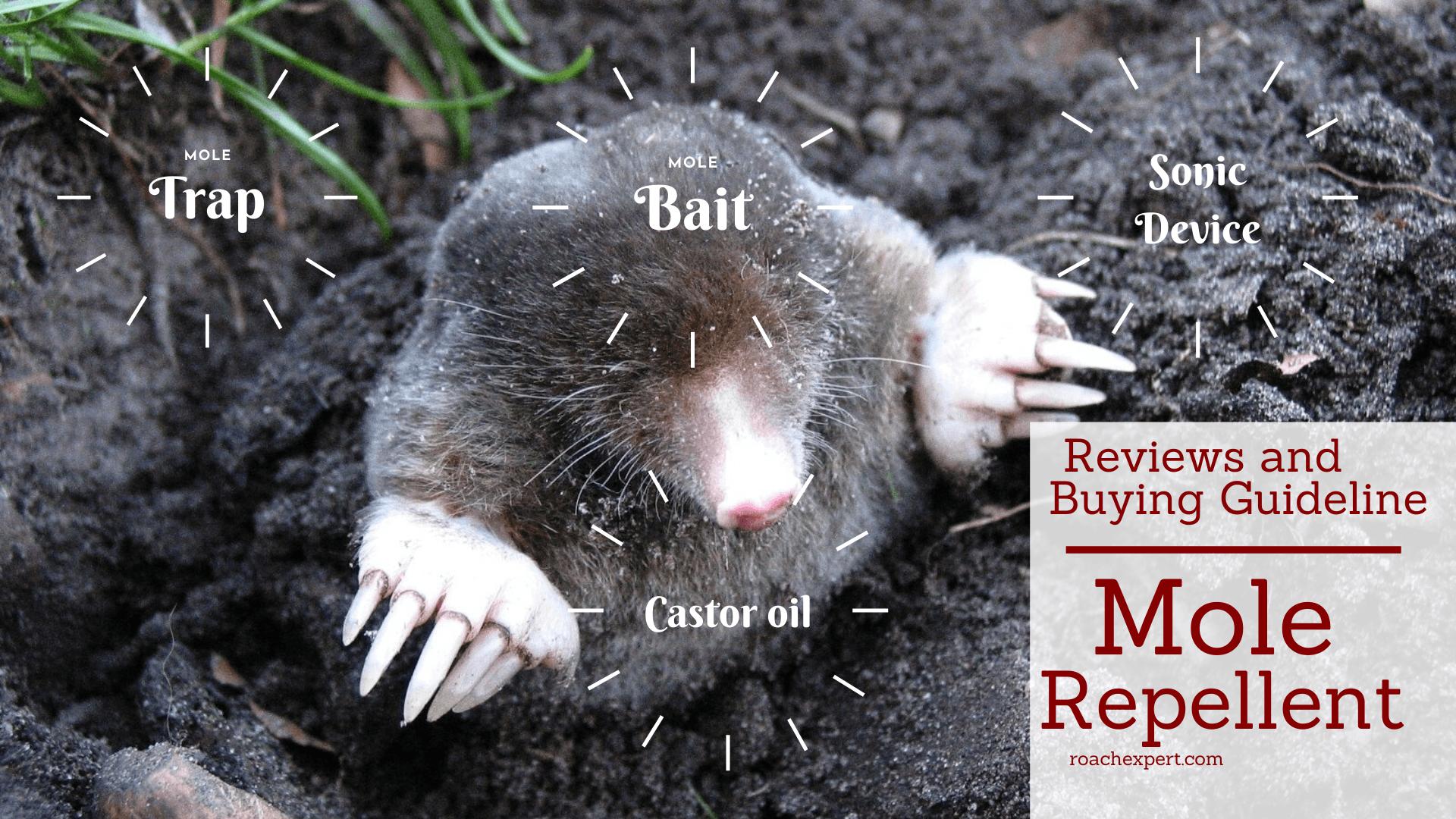 Best Mole Repellent
