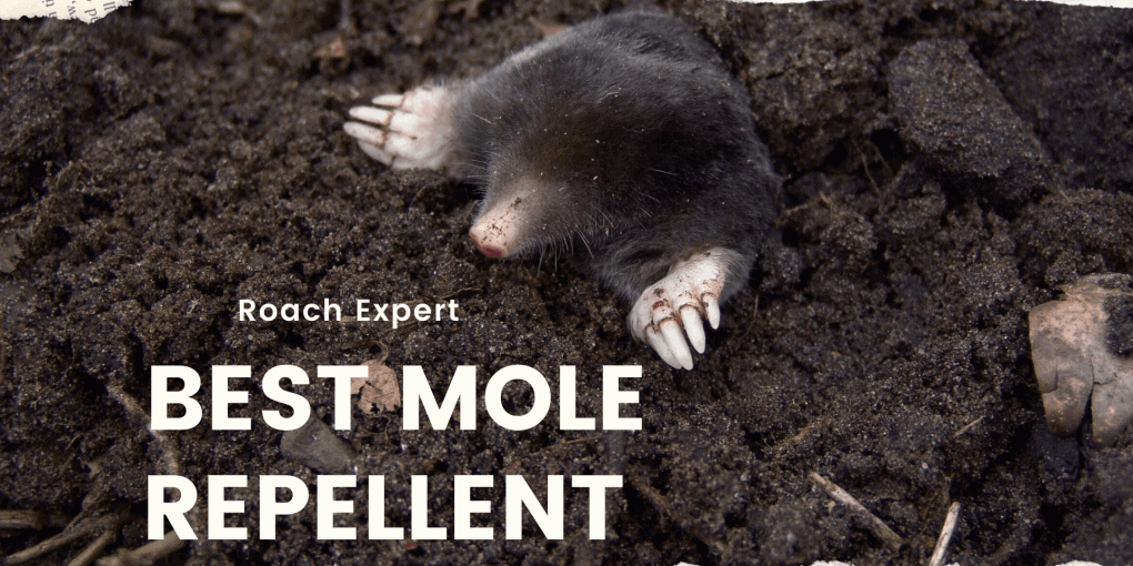 best mole repellent
