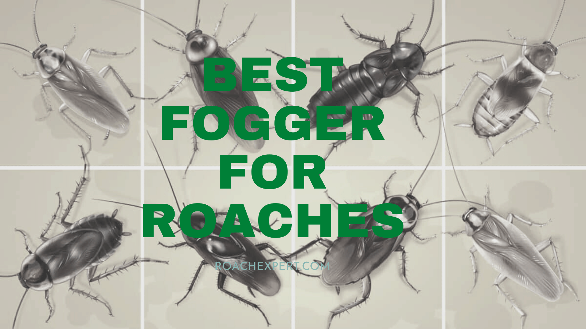 Best Fogger For Roaches