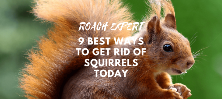 9 Best Ways to Get Rid of Squirrels Today