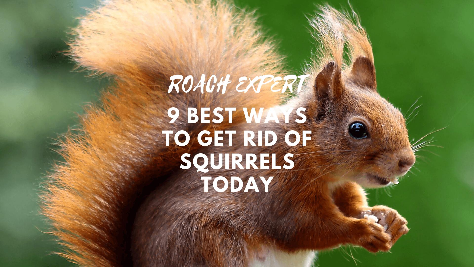9 Best Ways to Get Rid of Squirrels Today
