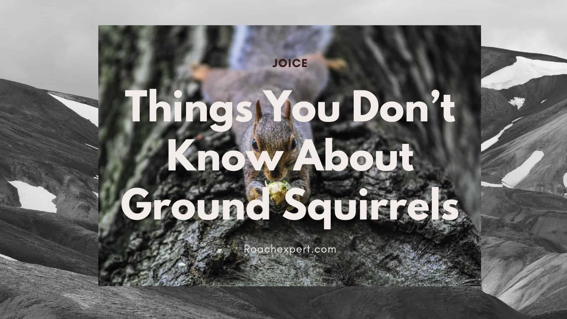 Things You Don't Know About Ground Squirrels (2)