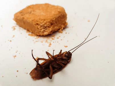 the best roach repellents